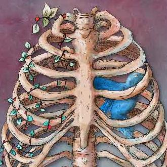 Göğüs Kafesi