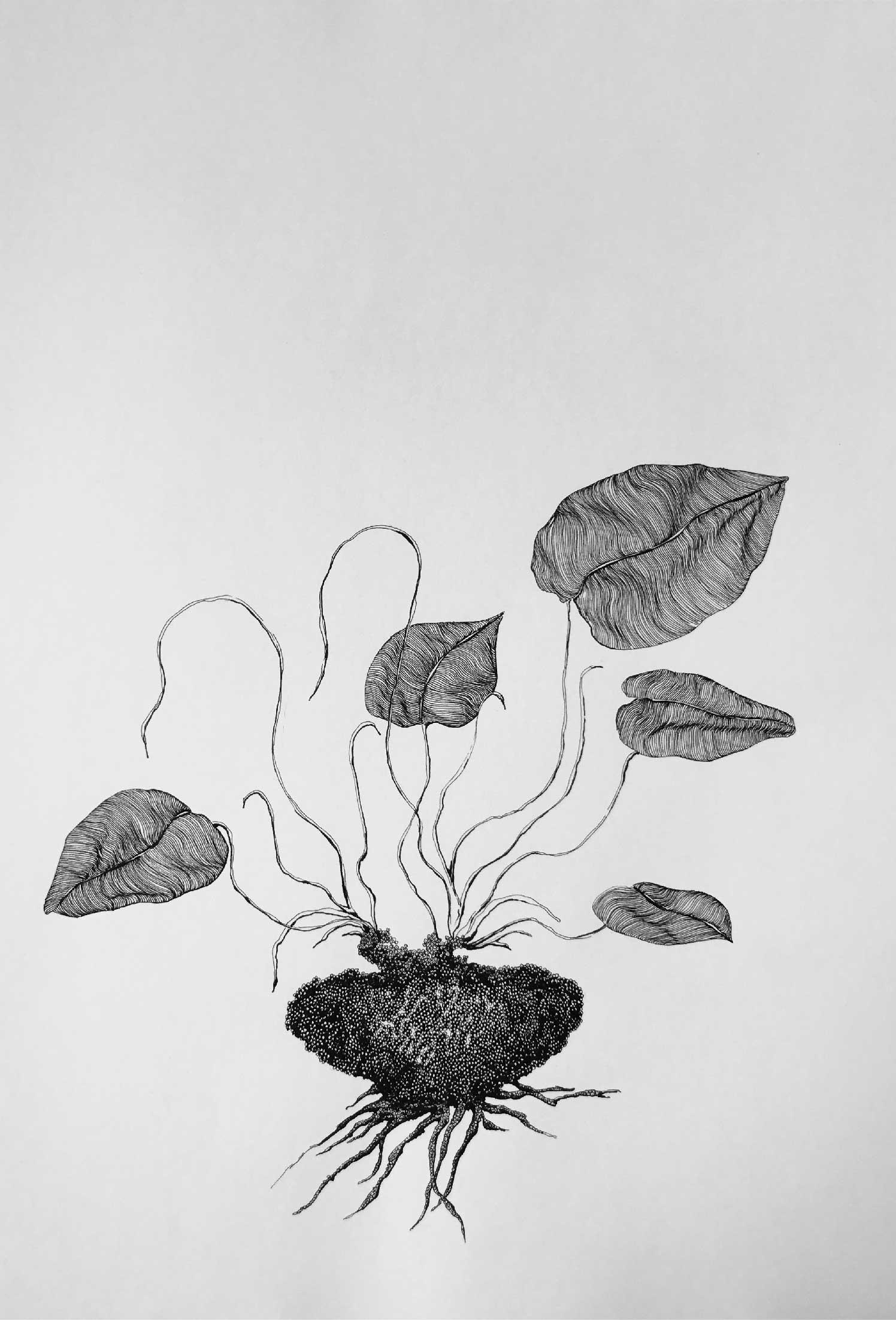 'Bitki olmak nasıldır? Serisi